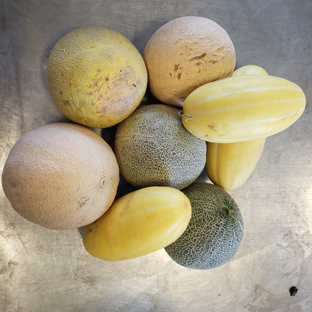 What's🌱at Rochon Garden: Melons