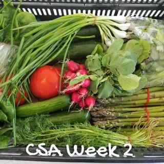 CSA Week 2- 2018.jpg