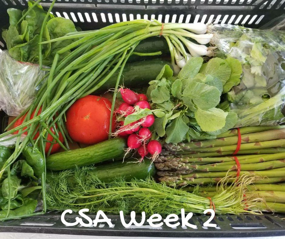 CSA Week 2- 2018