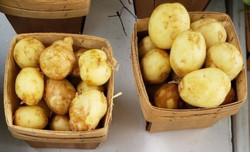 Potatoes_edited