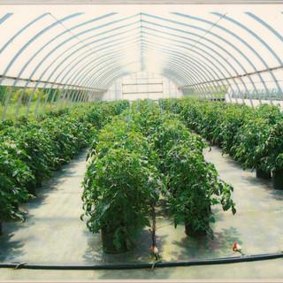 Veggie Pictures 90001.jpg
