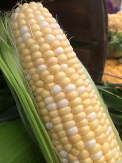 Rochon Corn