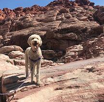 Teresa's dog.jpg