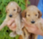 Buttercup and Bailey's pups 3 weeks old