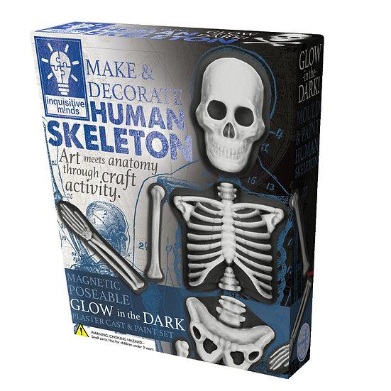 Human Skeleton Make and Decorate