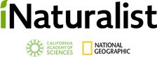 iNaturalist_logo.png