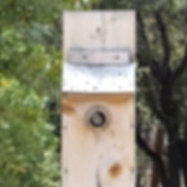 Bluebird_box_Bewicks_wren_DSC04349 (2).J