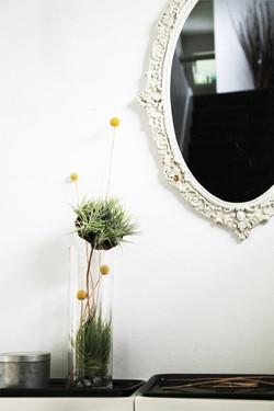Колба декоративная с тилландсиями