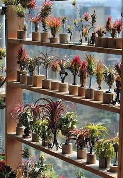 Оформление воздушными растениями