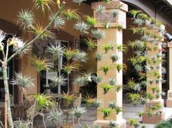 озеленение воздушными растениями