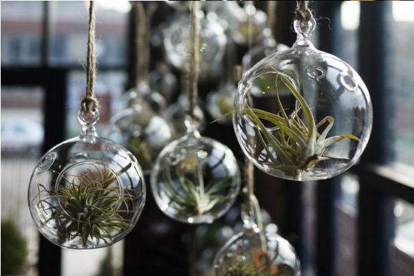Воздушные растения в стекле