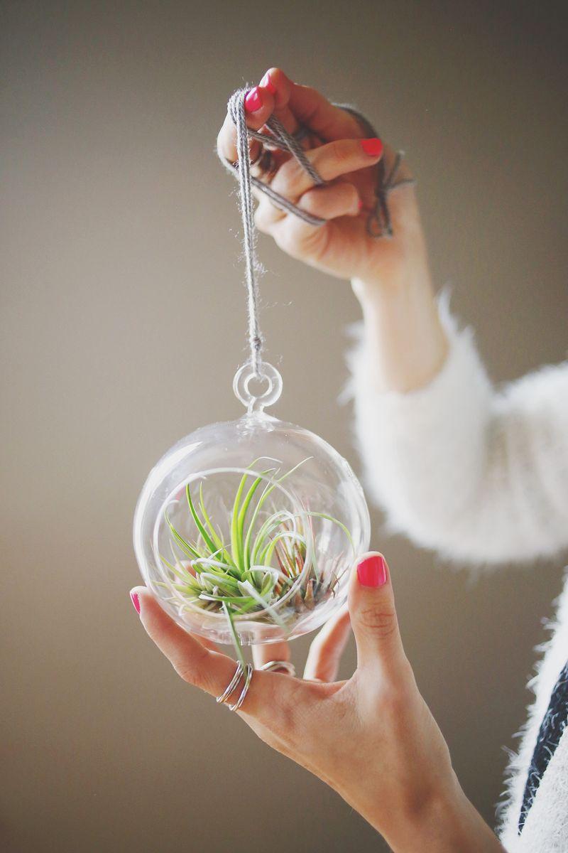 Растение в стекле