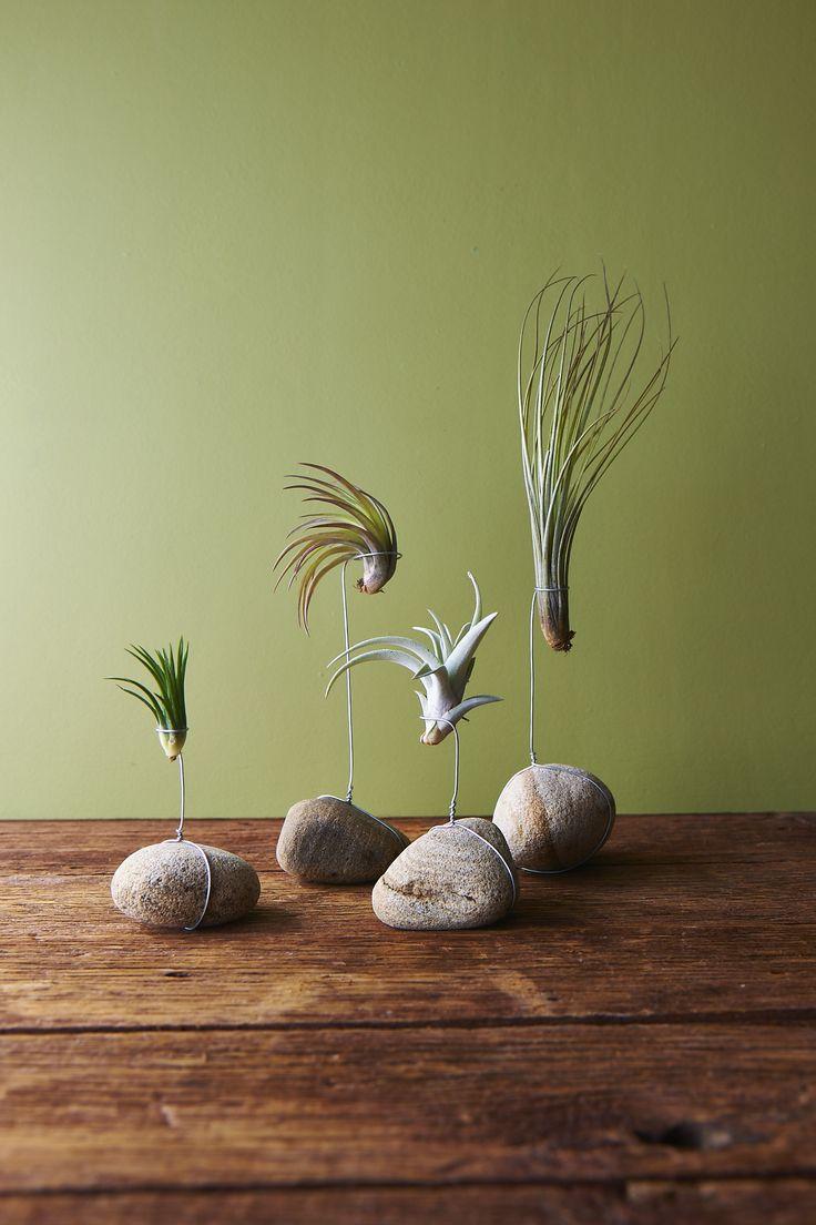 композиция тилландсий на камнях