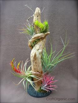 Элемент декорирования тилландсиями