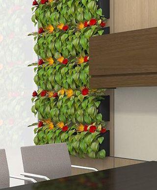 Вертикальное озеленение тилландсией