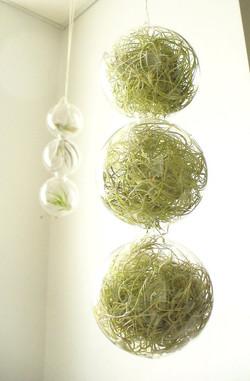 пример озеленения нашими растениями
