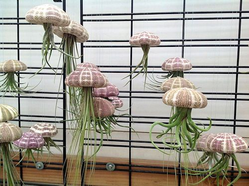 Медузы-иноплатяне