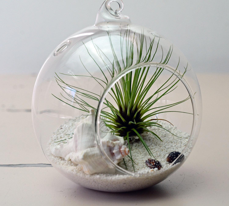 Тilandsija в стекле
