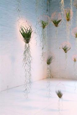 Воздушные растения