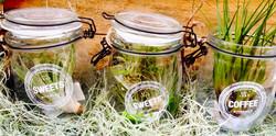 Эпифиты в баночке