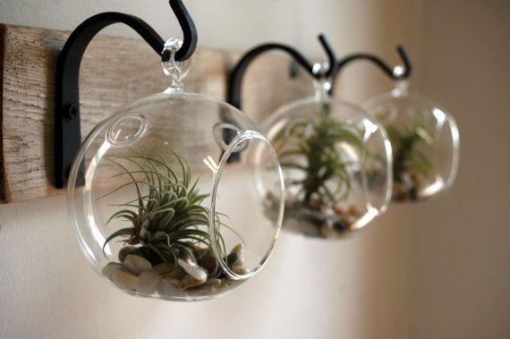 Воздушные растения. дизайн