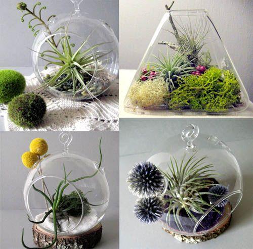 Воздушные растения во флорариумах