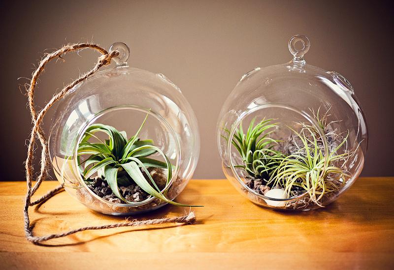 Оформление растениями в стекле