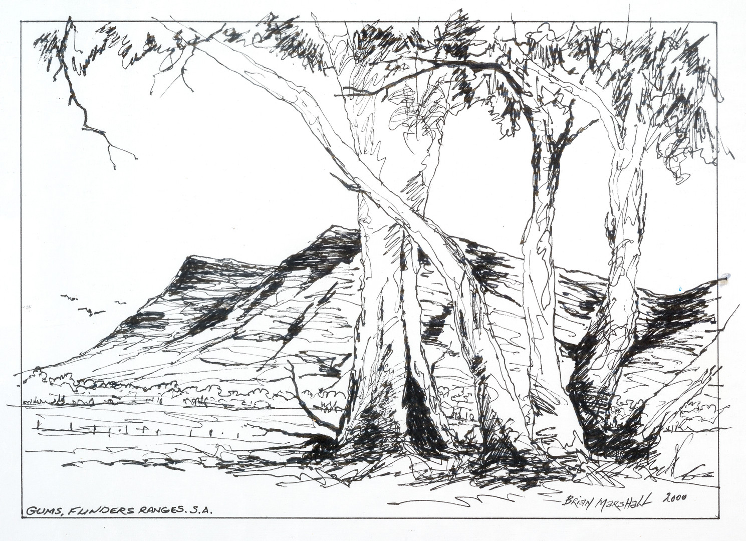 51. Gums - Flinders Ranges by Brian M