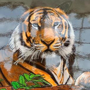 26. Regal Tiger by Cynthia