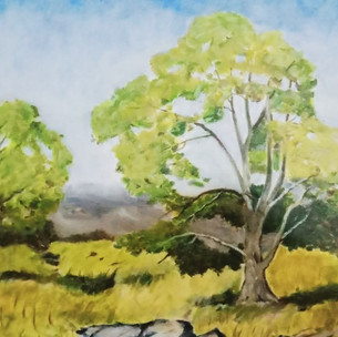 7. Trees in the foreground by John F