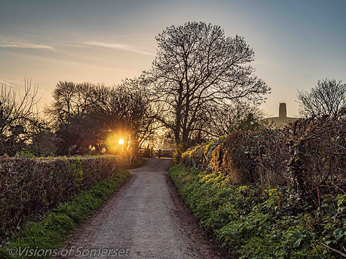 Limited Edition Print of sunrise through the trees and Glastonbury Tor.