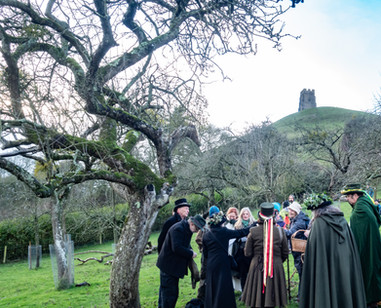 Avalon Orchard, Glastonbury Tor.