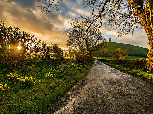 Jigsaw of Daffodils in the sunshine and Glastonbury Tor