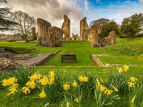 Limited Edition Canvas of the daffodils at Glastonbury Abbey