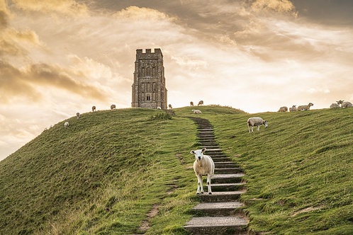 Limited Edition Print of A Model Sheep on Glastonbury Tor