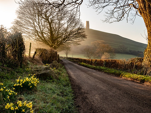Limited Edition Print of Daffodils and the Tor