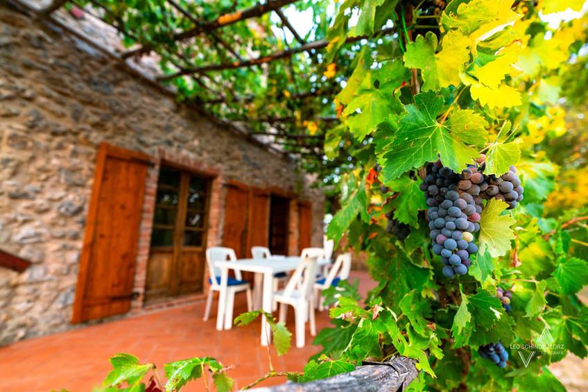 Ferienhaus in der Toskana Terrasse mit Weintrauben