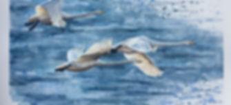 flyingswans.JPG