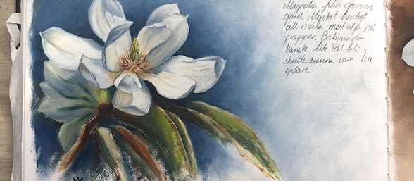 Magnolia flower studies.