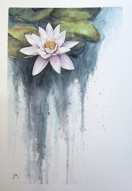 Waterlily.