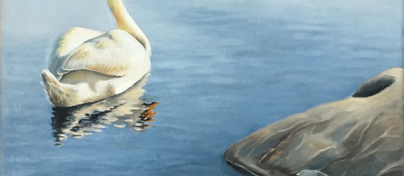 A Swan and a Tui.