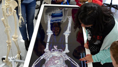 Lights, Camera, Anatomage!