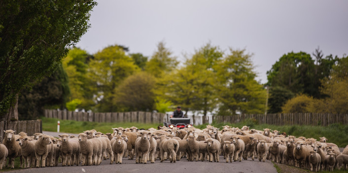 Ruanui farm-70.jpg