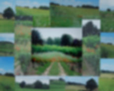 C08-Landscape Collage.jpg