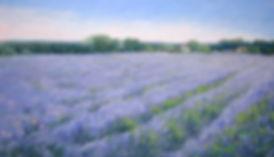 #700-Lavender Impressions-16x28.jpg