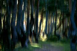 Les pins de boulange