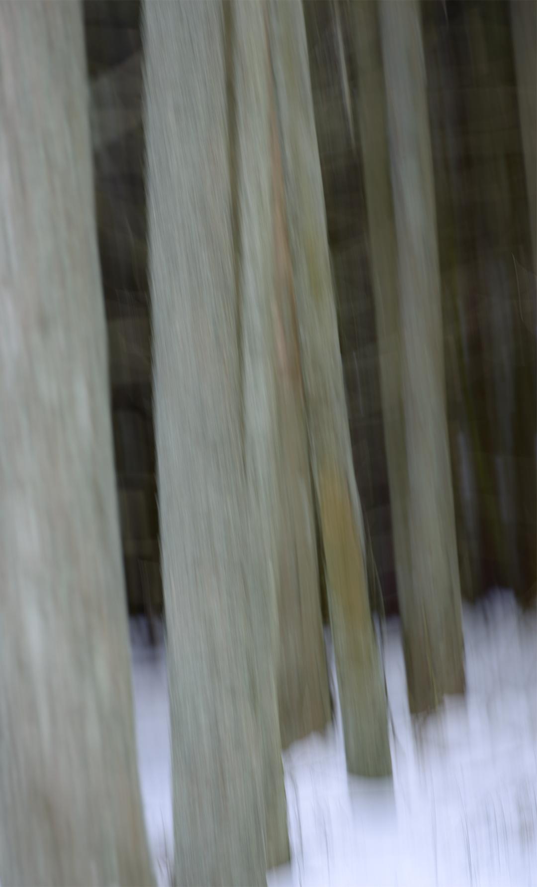 Un hivers en forêt