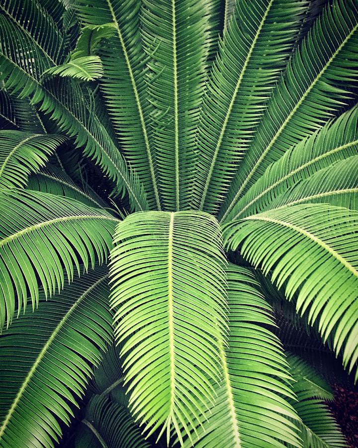 close-up-of-palm-tree-leaves-anna-mller-
