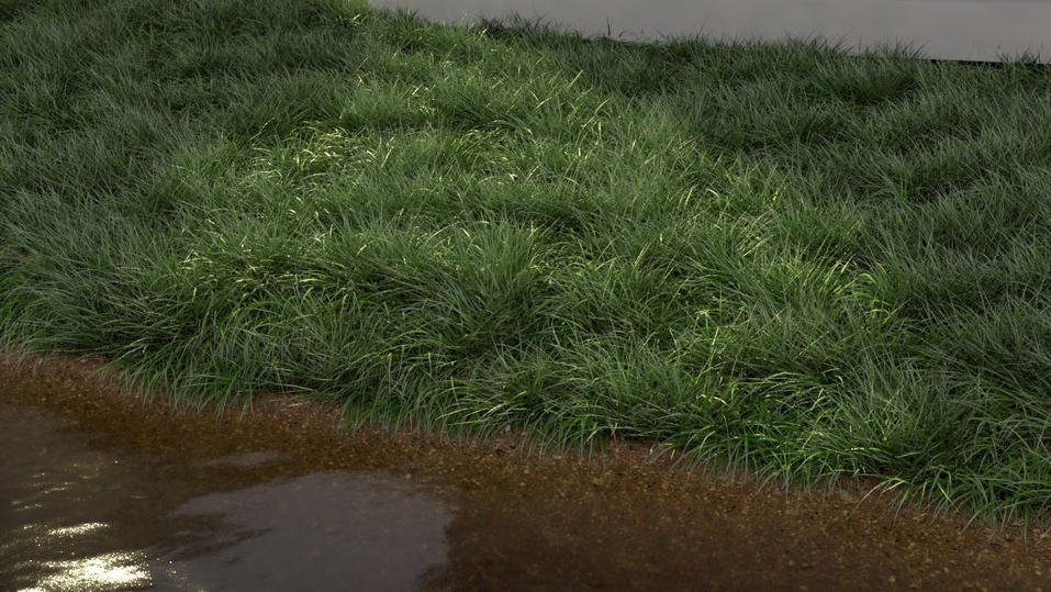 3D Long grass mockup