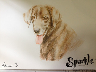 Sparkle the Dog - Sketch